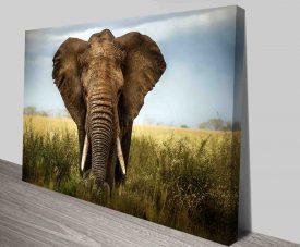 mighty elephant canvas wall art print