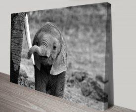 adorable baby elephant wall art canvas print