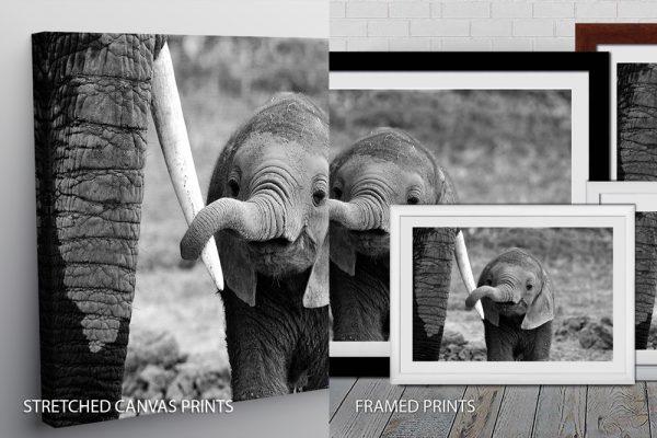 Elephant Quality Print