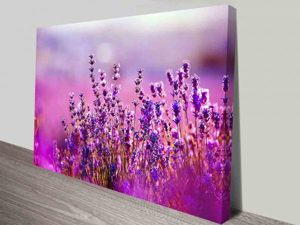 lavender flowers wall print canvas art