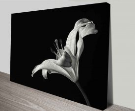monochrome lily canvas print wall art