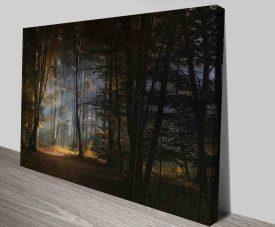 fairy tale forest photo on canvas print australia