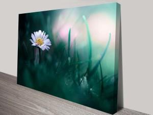mystical daisy custom photo canvas online