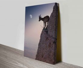 mountain goat canvas wall art online
