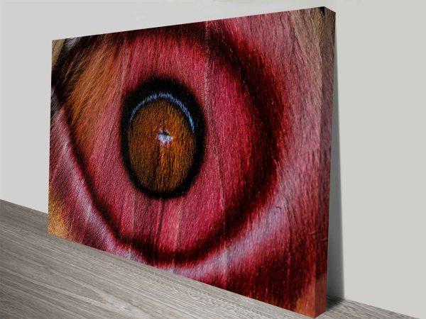eye see madagascan suraka moth wall art