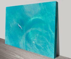 Buddy Dolphin Matt Day Collection on Canvas Print Art Gallery