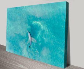 Buddy Dolphin V2 Matt Day Collection on Canvas Print Art Gallery
