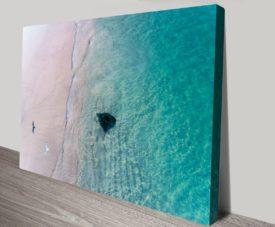 Stingray-Bird Matt Day Collection on Canvas Print Art Gallery