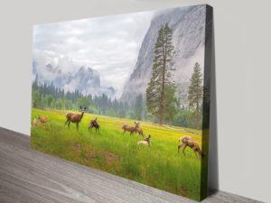 Deer Herd Canvas Print Art