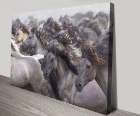 Wildpferde Horses Canvas Artwork Prints