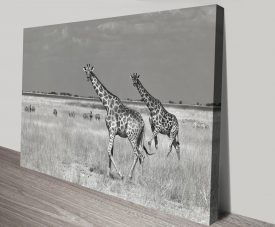 Giraffe Pair Animal Africa Canvas Artwork