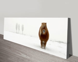 The cold pony panoramic canvas print