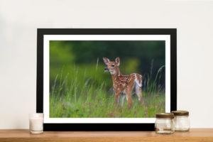 Young Deer Framed Wall Art Australia