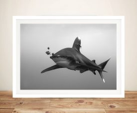 Whitetip Shark Black and White Photo Wall Print