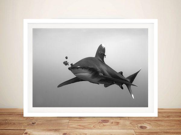 Whitetip Shark Black and White Photo Wall Print
