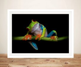 Colourful Frog Framed Wall Art