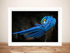 Blue Parrot Framed Wall Art