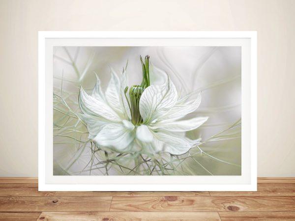 Nigella Flower Framed Wall Art Picture