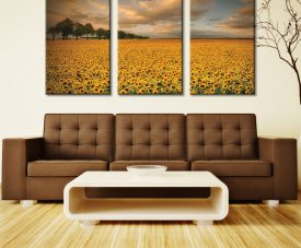 Sunflowers 3 Piece Wall Art Prints Triptych Canvas