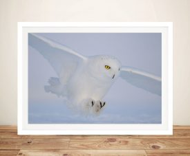 Snowy Owl Framed Wall Art