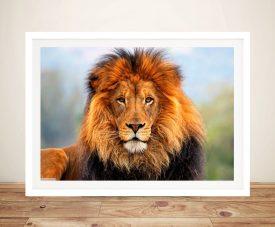 Lion closeup Framed Wall Art