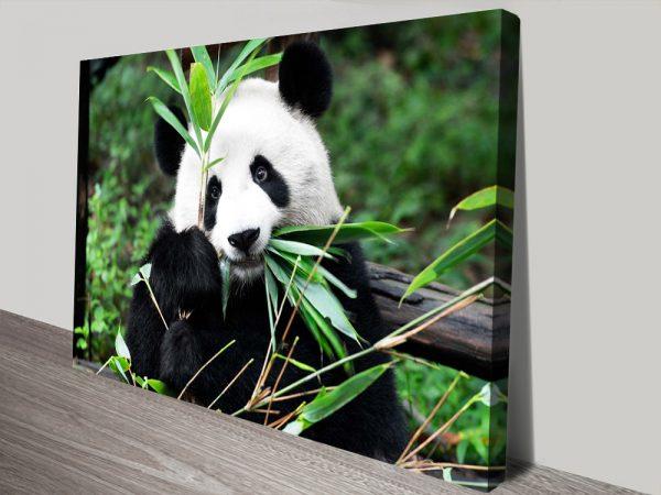 Buy Giant Panda ll Canvas Wall Art Online