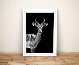 Buy A Framed Print of An Antelope by Hugonnard