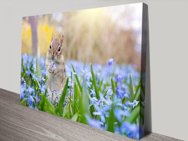Squirrel in Blooms Cheap Framed Art Australia