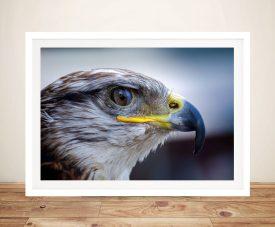 Buy Eagle Eye View Wild Bird Framed Wall Art