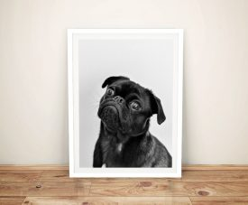 Buy an Adorable Pug Framed Canvas Print