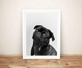 Buy an Adorable Pug Framed Canvas Print