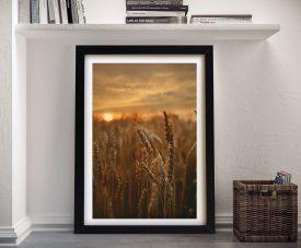 Buy a Print of Barley Sunset Landscape Artwork