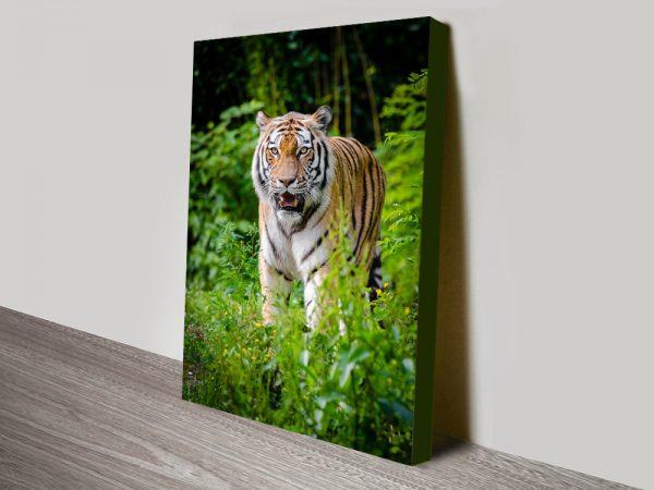Buy a Print of a Tiger Unique Gift Ideas Australia