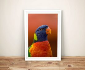 Buy Colourful Parakeet Stretched Canvas Art