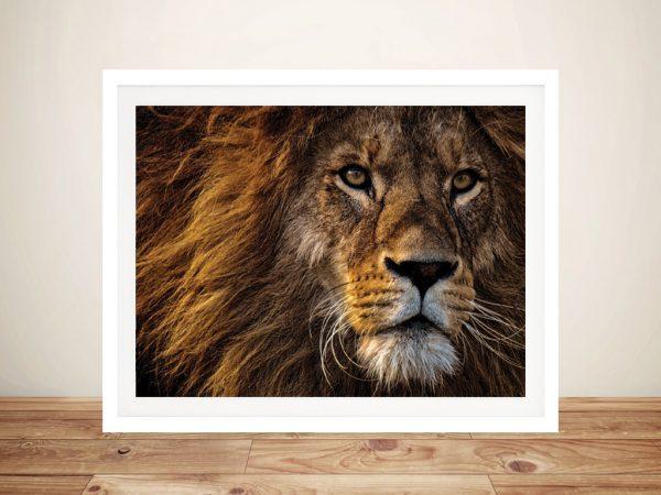 Buy Lions Glare Animal Photography Wall Art