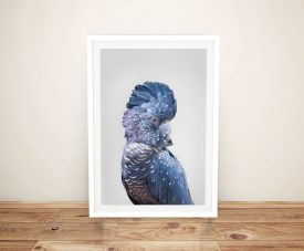 Buy a Ready to Hang Print of a Blue Cockatoo