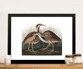 American Bittern Birds of American Canvas Artwork