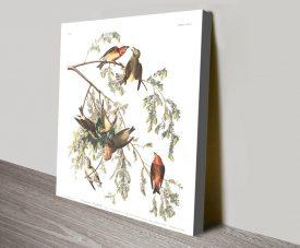 Buy American Crossbill Audubon Canvas Wall Art