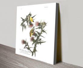 American Goldfinch Audubon Classic Wall Art