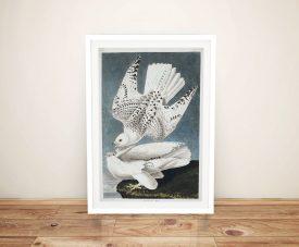 John James Audubon Jer Falcon Print on Canvas