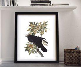 John James Audubon Raven Framed Canvas Print