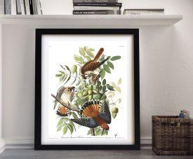 Framed Audubon American Sparrow Hawk Print
