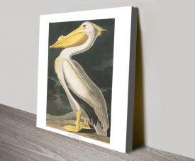 American White Pelican Audubon Classic Wall Art