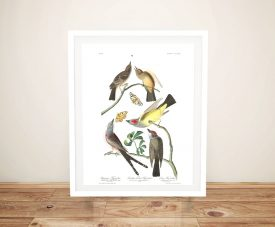 Arkansaw Flycatcher Audubon Print on Canvas