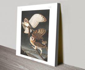 Barn Owl Classic Wildlife Audubon Wall Art