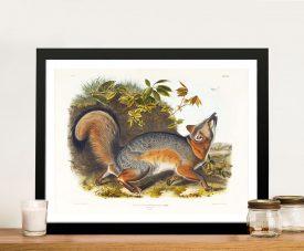Grey Fox Audubon Wildlife Classic Print on Canvas