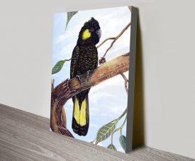 Black Cockatoo Wildlife Print on Canvas