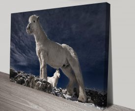 Fjord Horse Wildlife Stretched Canvas Art