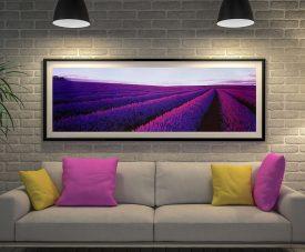 Lavender in Tasmania Panoramic Peter Lik Print