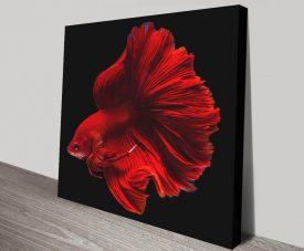 Buy Halfmoon Super Red Fish Print on Canvas